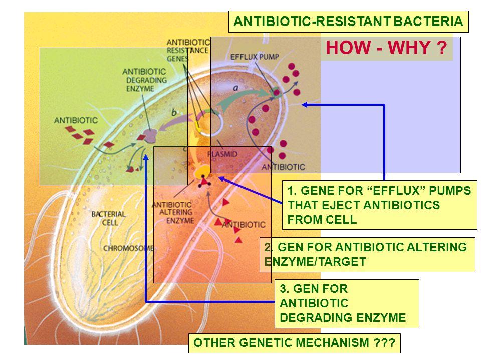 2.GEN FOR ANTIBIOTIC ALTERING ENZYME/TARGET 3. GEN FOR ANTIBIOTIC DEGRADING ENZYME 1.
