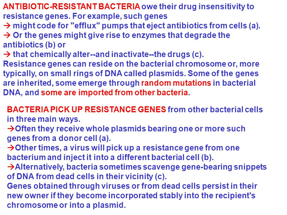 BACTERIA PICK UP RESISTANCE GENES from other bacterial cells in three main ways.  Often they receive whole plasmids bearing one or more such genes fr
