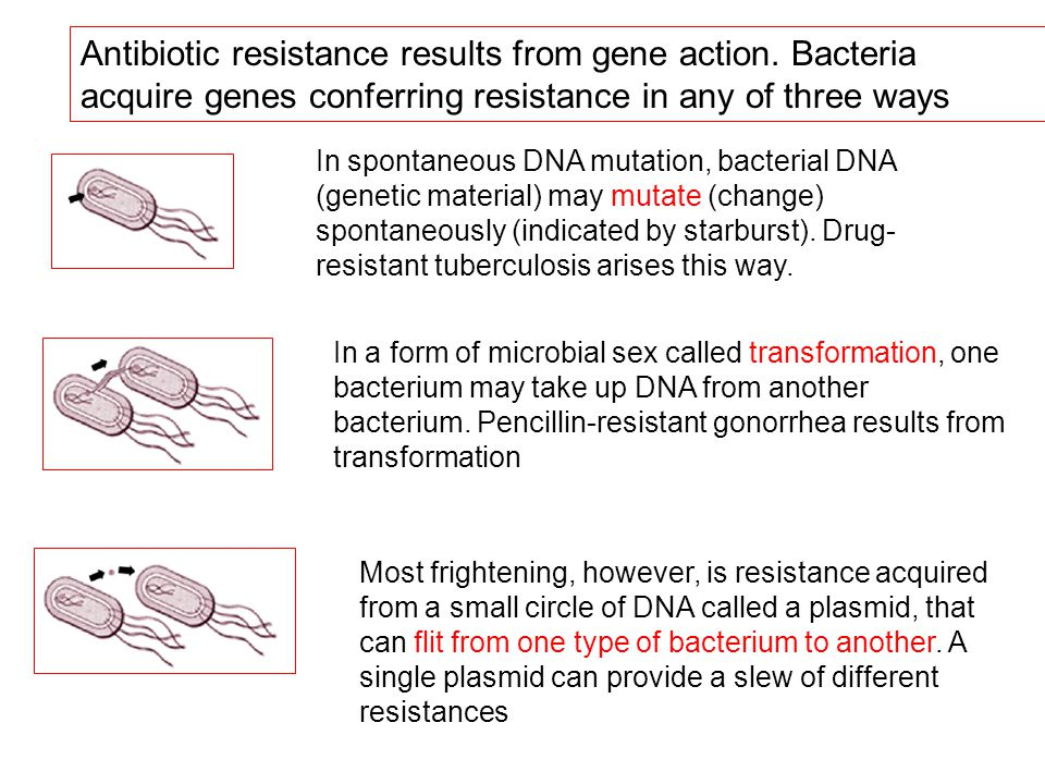 Antibiotic resistance results from gene action. Bacteria acquire genes conferring resistance in any of three ways In spontaneous DNA mutation, bacteri