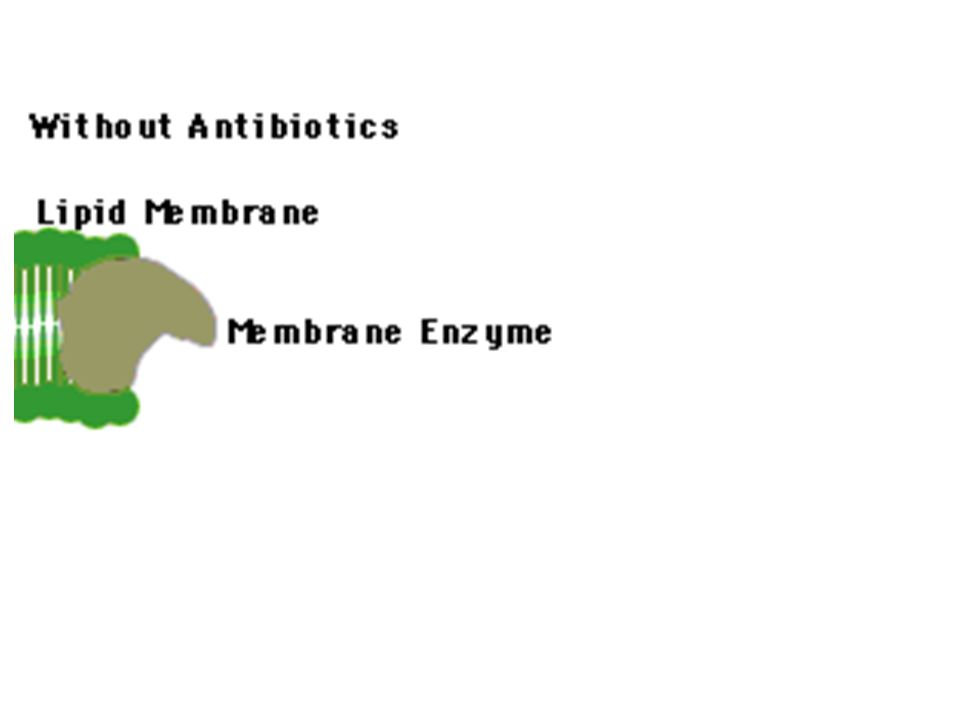 Genetic Basis of Acquired Resistance 1.Mutation - spontaneous alteration in genetic sequence in bacterial chromosome 2.Conjugation - transfer of genetic information via conjugation tubes 3.Transduction (bacteriophage) - phage incorporation of genetic information which can then be transferred to another bacterium 4.Transformation - possible assimilation of genetic material across cell wall/membrane Location: plasmids, transposons, chromosome Phenotypic Mechanisms of Resistance 1.Enzyme degradation 2.Barrier to the target 3.Target absent