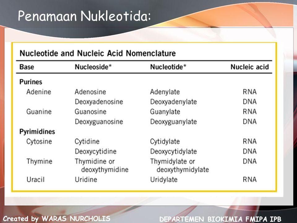 Created by WARAS NURCHOLIS DEPARTEMEN BIOKIMIA FMIPA IPB Penamaan Nukleotida: