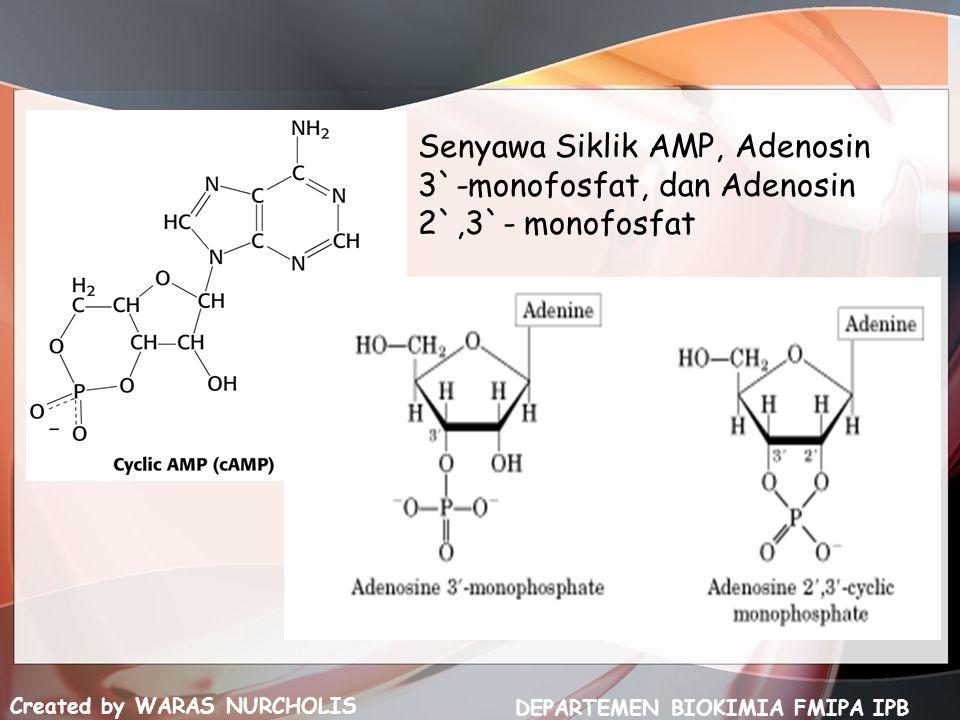 Senyawa Siklik AMP, Adenosin 3`-monofosfat, dan Adenosin 2`,3`- monofosfat Created by WARAS NURCHOLIS DEPARTEMEN BIOKIMIA FMIPA IPB