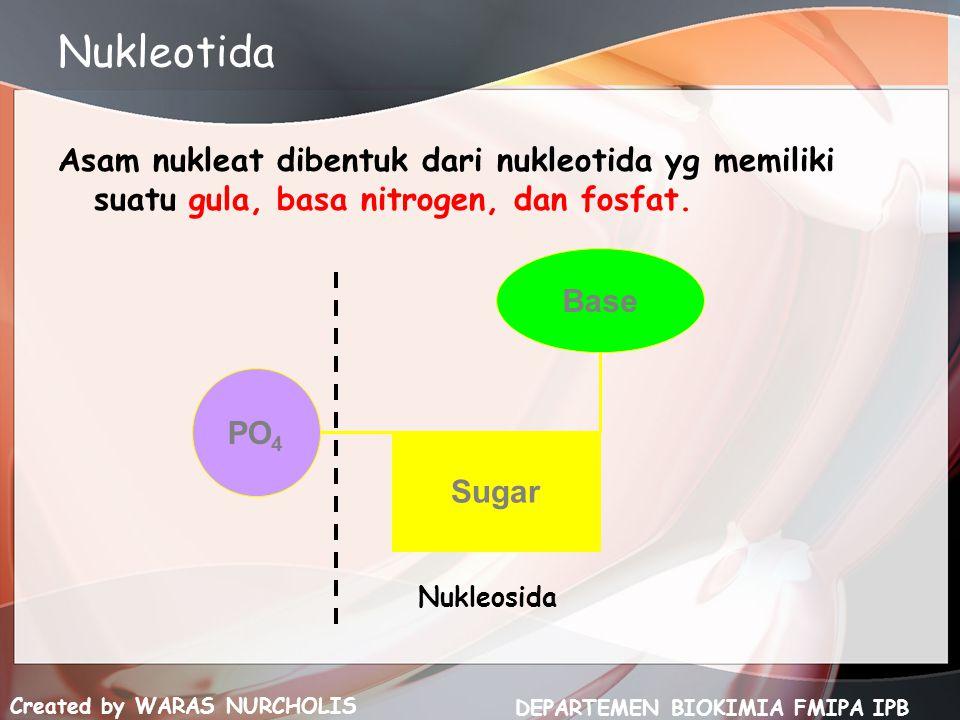 Created by WARAS NURCHOLIS DEPARTEMEN BIOKIMIA FMIPA IPB Nukleotida Asam nukleat dibentuk dari nukleotida yg memiliki suatu gula, basa nitrogen, dan f
