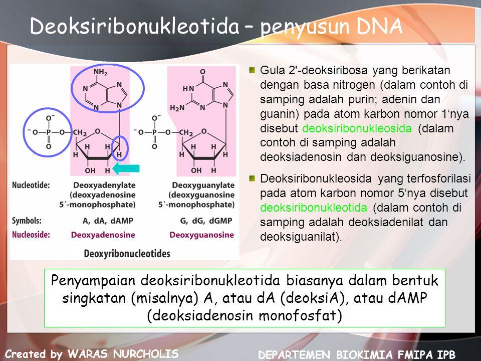 Created by WARAS NURCHOLIS DEPARTEMEN BIOKIMIA FMIPA IPB Deoksiribonukleotida – penyusun DNA Gula 2'-deoksiribosa yang berikatan dengan basa nitrogen