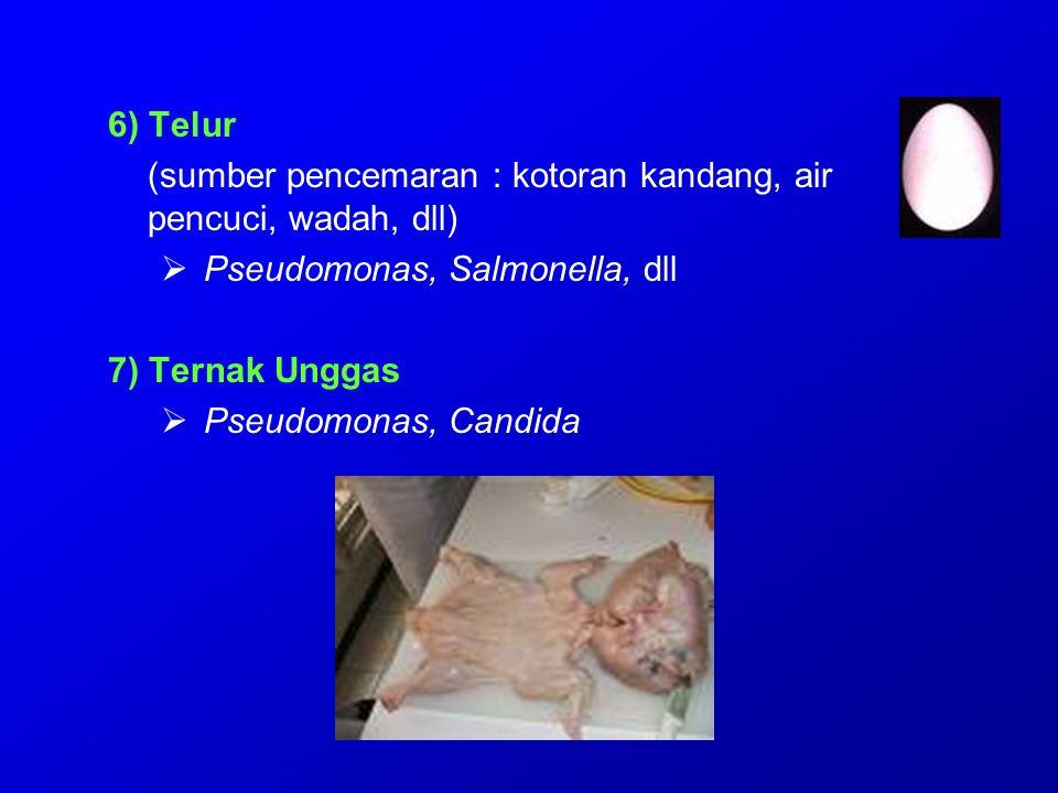 6) Telur (sumber pencemaran : kotoran kandang, air pencuci, wadah, dll)  Pseudomonas, Salmonella, dll 7) Ternak Unggas  Pseudomonas, Candida