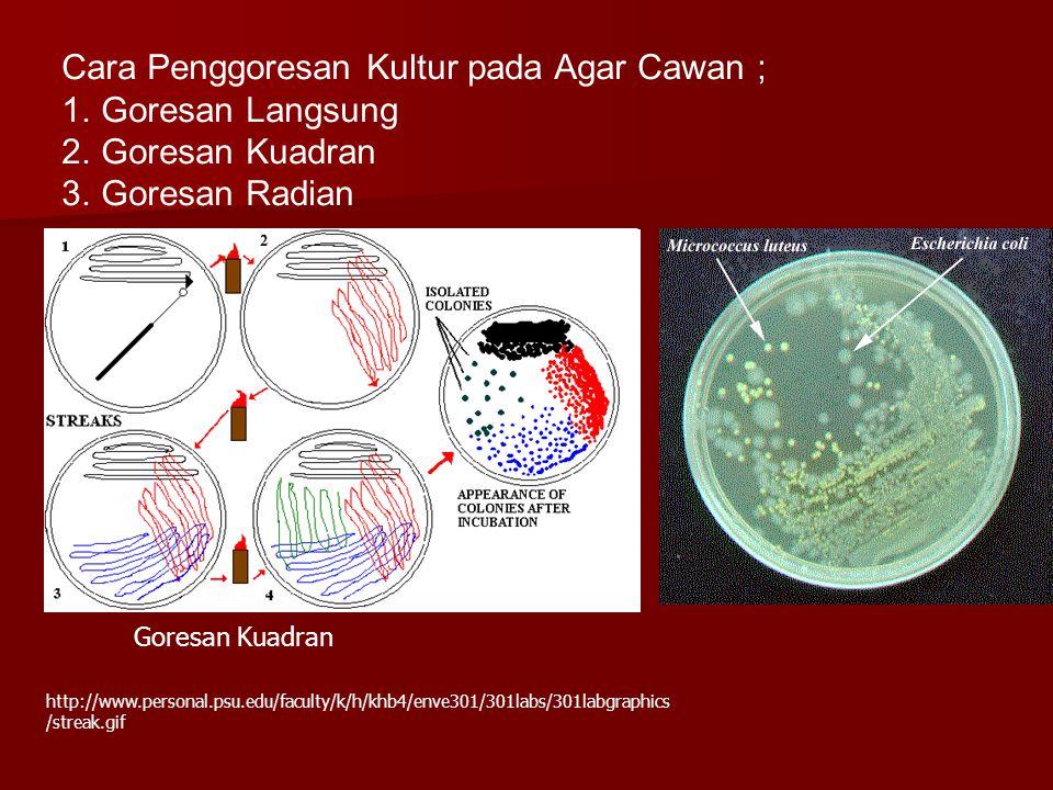 Goresan Kuadran http://www.personal.psu.edu/faculty/k/h/khb4/enve301/301labs/301labgraphics /streak.gif Cara Penggoresan Kultur pada Agar Cawan ; 1.Go