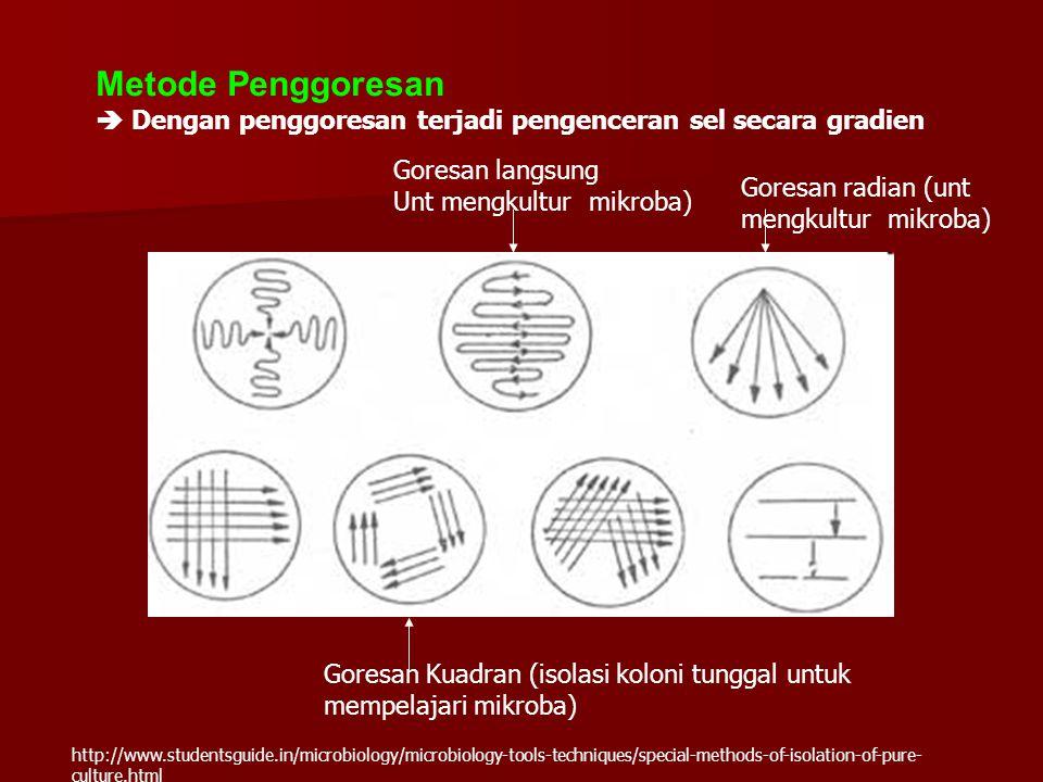Metode Penggoresan  Dengan penggoresan terjadi pengenceran sel secara gradien Goresan langsung Unt mengkultur mikroba) Goresan radian (unt mengkultur