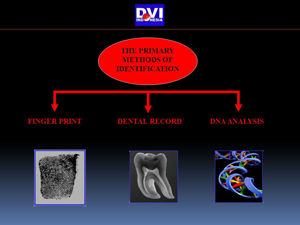FINGER PRINTDENTAL RECORDDNA ANALYSIS THE PRIMARY METHODS OF IDENTIFICATION