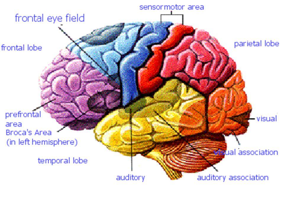 KETERAMPILAN BERBICARA Keterampilan berbicara adalah kemampuan mengucapkan bunyi-bunyi artikulasi atau kata-kata untuk mengekspresikan, menyatakan serta menyampaikan pikiran, gagasan, dan perasaan.