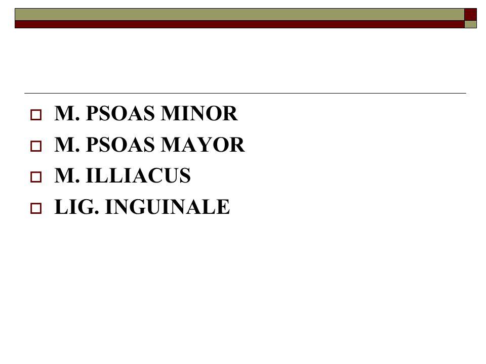  M. PSOAS MINOR  M. PSOAS MAYOR  M. ILLIACUS  LIG. INGUINALE