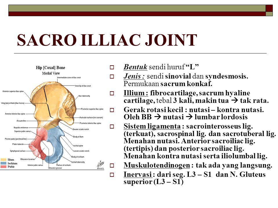 """SACRO ILLIAC JOINT  Bentuk sendi huruf """"L""""  Jenis : sendi sinovial dan syndesmosis. Permukaan sacrum konkaf.  Illium : fibrocartilage, sacrum hyali"""