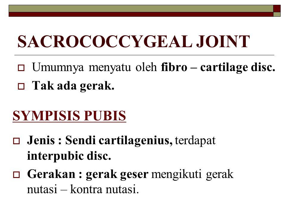 SACROCOCCYGEAL JOINT  Umumnya menyatu oleh fibro – cartilage disc.  Tak ada gerak. SYMPISIS PUBIS  Jenis : Sendi cartilagenius, terdapat interpubic