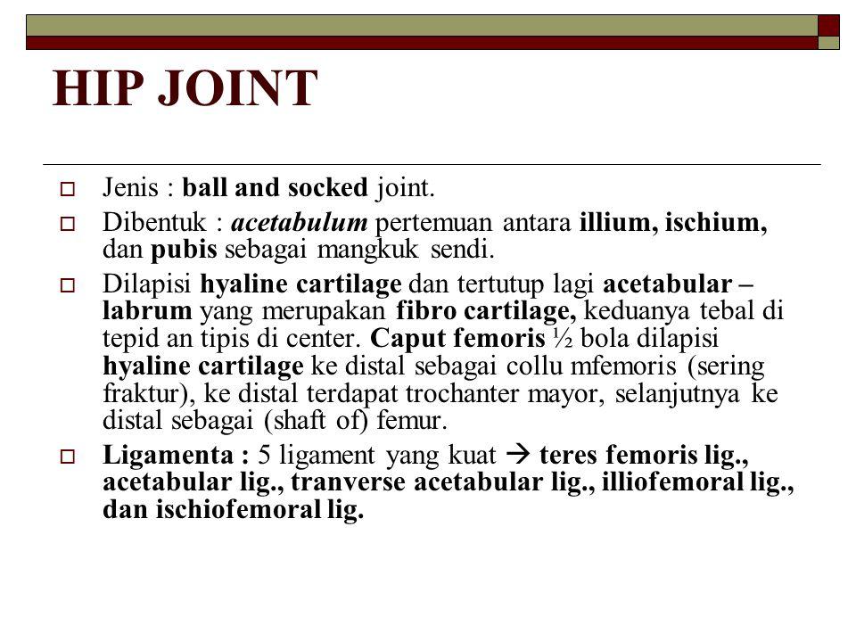 HIP JOINT  Jenis : ball and socked joint.  Dibentuk : acetabulum pertemuan antara illium, ischium, dan pubis sebagai mangkuk sendi.  Dilapisi hyali