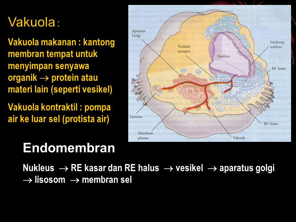 Vakuola : Vakuola makanan : kantong membran tempat untuk menyimpan senyawa organik  protein atau materi lain (seperti vesikel) Vakuola kontraktil : p