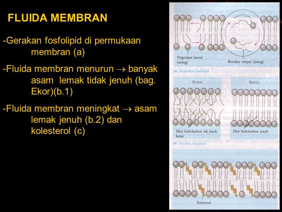 FLUIDA MEMBRAN -Gerakan fosfolipid di permukaan membran (a) -Fluida membran menurun  banyak asam lemak tidak jenuh (bag. Ekor)(b.1) -Fluida membran m