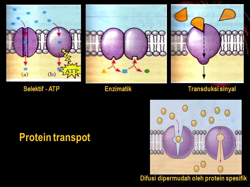 Protein transpot Selektif - ATPEnzimatikTransduksi sinyal Difusi dipermudah oleh protein spesifik