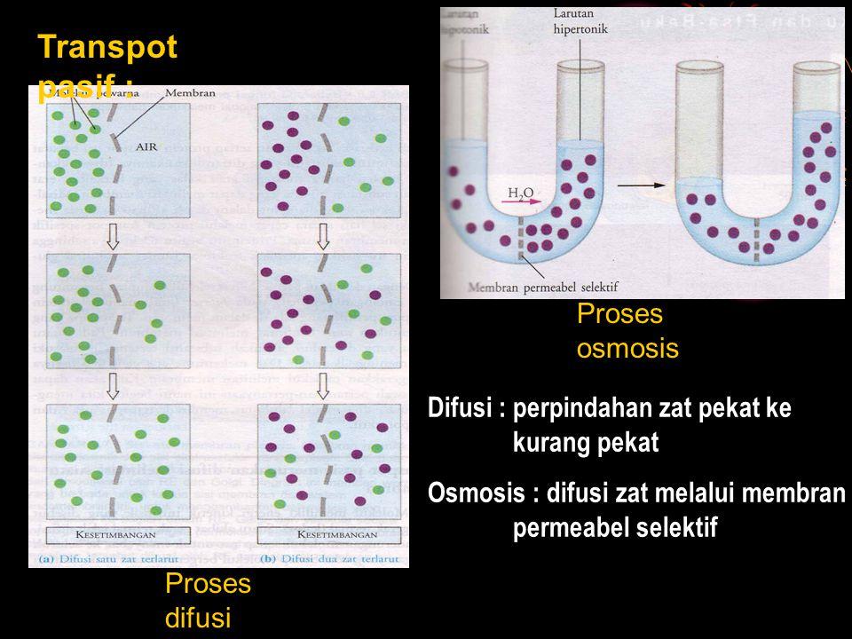 Transpot pasif : Proses difusi Proses osmosis Difusi : perpindahan zat pekat ke kurang pekat Osmosis : difusi zat melalui membran permeabel selektif