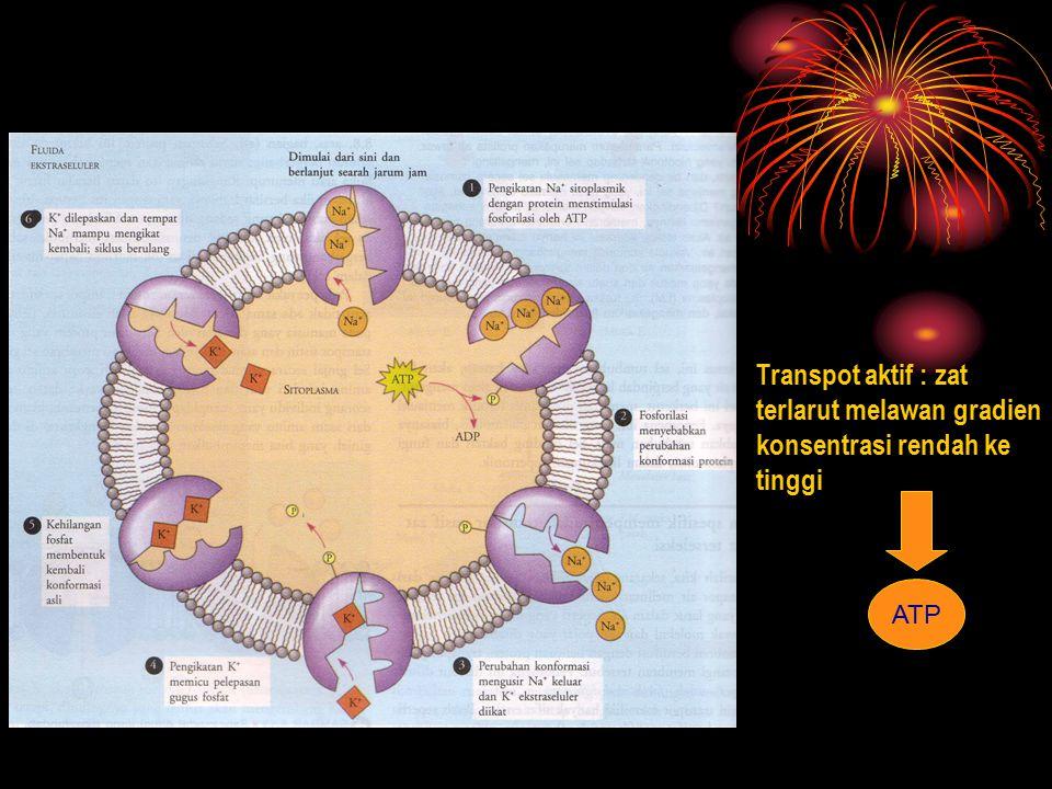 Transpot aktif : zat terlarut melawan gradien konsentrasi rendah ke tinggi ATP
