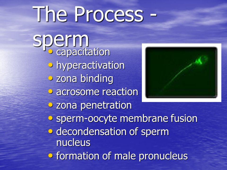 Entry of Sperm