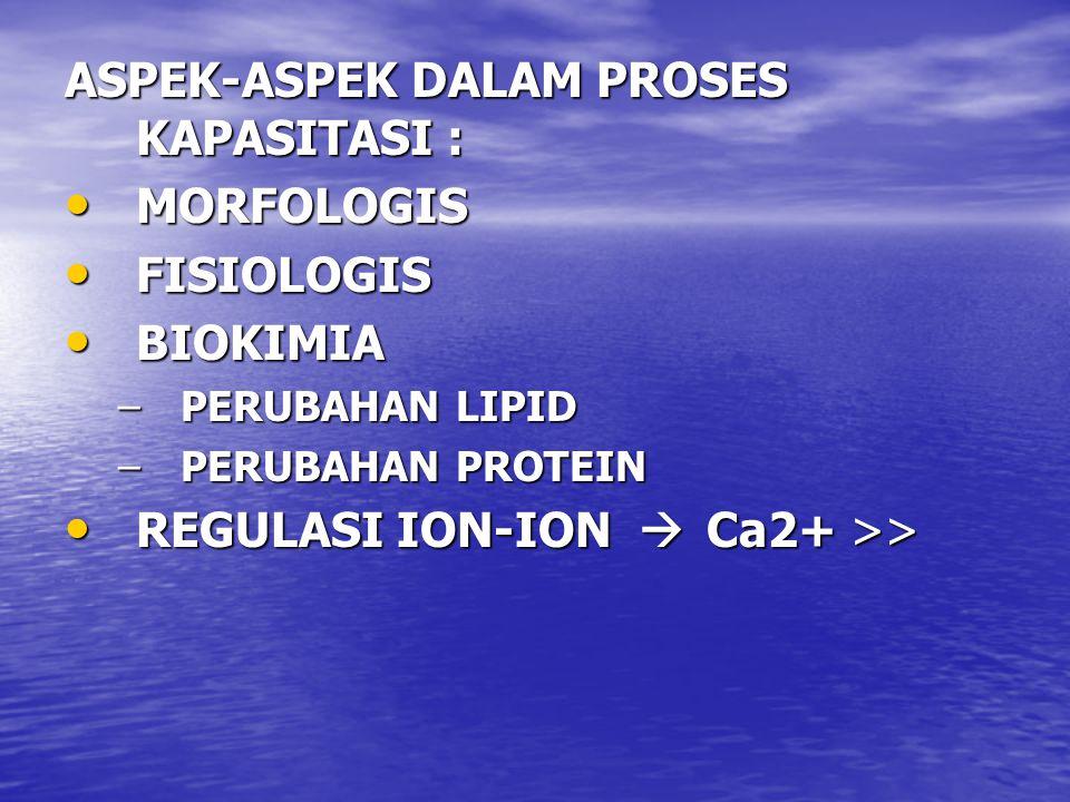 ASPEK-ASPEK DALAM PROSES KAPASITASI : MORFOLOGIS MORFOLOGIS FISIOLOGIS FISIOLOGIS BIOKIMIA BIOKIMIA –PERUBAHAN LIPID –PERUBAHAN PROTEIN REGULASI ION-ION  Ca2+ >> REGULASI ION-ION  Ca2+ >>