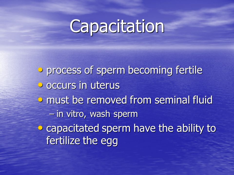 Capacitation process of sperm becoming fertile process of sperm becoming fertile occurs in uterus occurs in uterus must be removed from seminal fluid