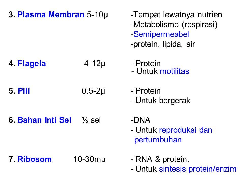 3. Plasma Membran 5-10µ-Tempat lewatnya nutrien -Metabolisme (respirasi) -Semipermeabel -protein, lipida, air 4. Flagela 4-12µ- Protein - Untuk motili