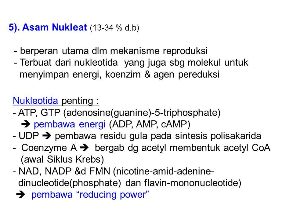 5). Asam Nukleat (13-34 % d.b) - berperan utama dlm mekanisme reproduksi - Terbuat dari nukleotida yang juga sbg molekul untuk menyimpan energi, koenz