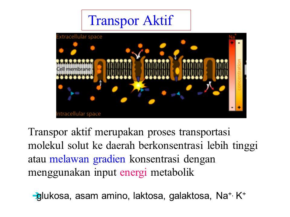 Transpor aktif merupakan proses transportasi molekul solut ke daerah berkonsentrasi lebih tinggi atau melawan gradien konsentrasi dengan menggunakan input energi metabolik Transpor Aktif  glukosa, asam amino, laktosa, galaktosa, Na +, K + ions, glucose, and amino acids