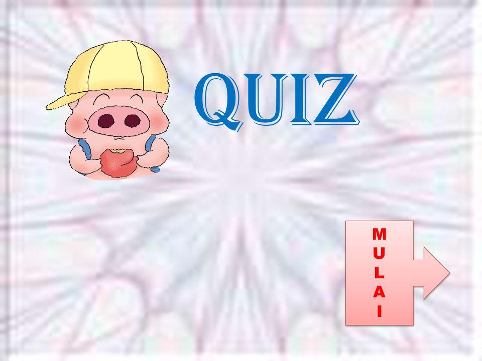 Quiz MULAIMULAI MULAIMULAI