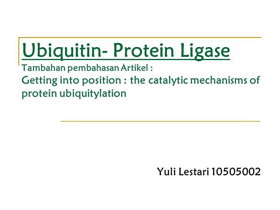 Ubiquitin- Protein Ligase Tambahan pembahasan Artikel : Getting into position : the catalytic mechanisms of protein ubiquitylation Yuli Lestari 10505002