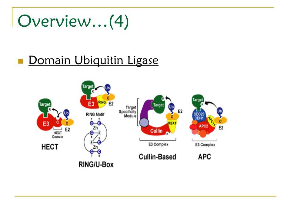 Domain Ubiquitin Ligase