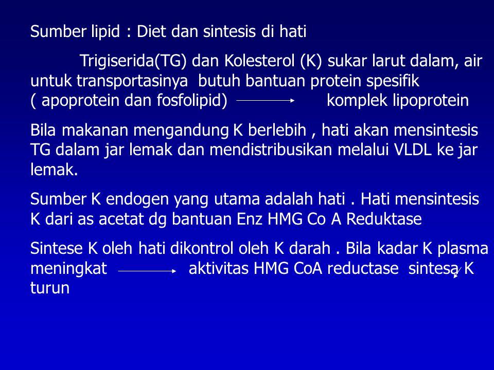 Sumber lipid : Diet dan sintesis di hati Trigiserida(TG) dan Kolesterol (K) sukar larut dalam, air untuk transportasinya butuh bantuan protein spesifik ( apoprotein dan fosfolipid) komplek lipoprotein Bila makanan mengandung K berlebih, hati akan mensintesis TG dalam jar lemak dan mendistribusikan melalui VLDL ke jar lemak.