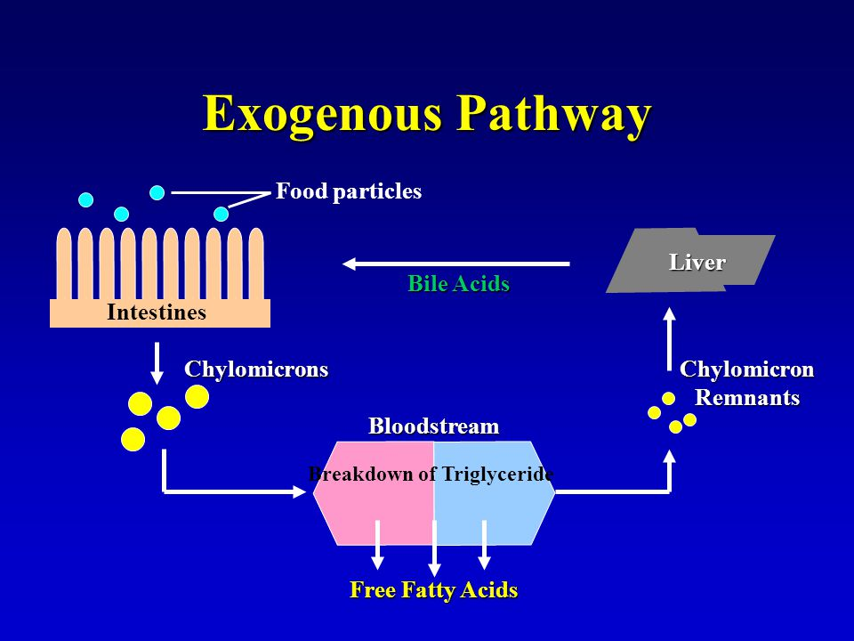 Exogenous Pathway Food particles Intestines Free Fatty Acids Breakdown of Triglyceride Chylomicrons Bloodstream Liver Chylomicron Remnants Bile Acids