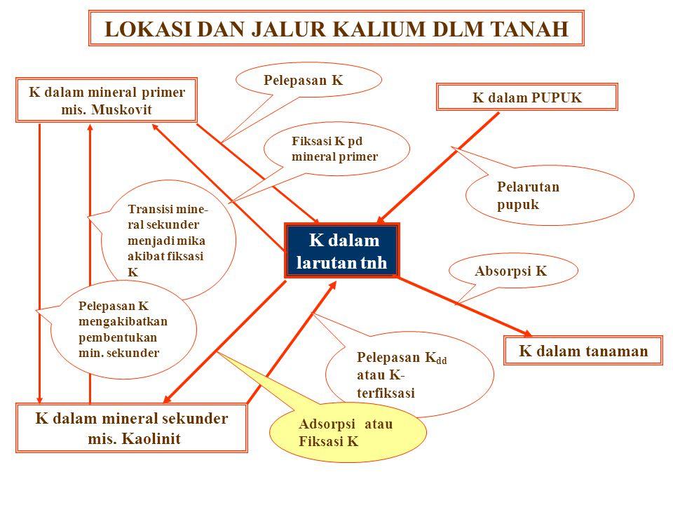BENTUK & KETERSEDIAAN Relatif tidak tersedia Feldspar, Mika, dll. (90-98% dari K-total) K segera tersedia K dpt ditukar dan K dlm larutan tanah ( 2 %