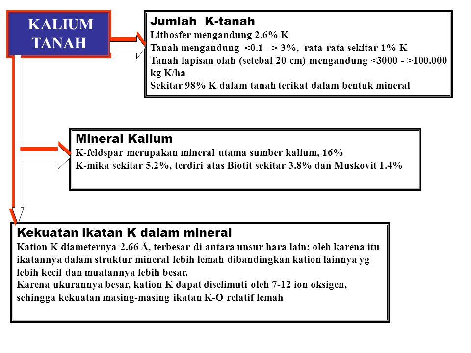 KALIUM TANAH Jumlah K-tanah Lithosfer mengandung 2.6% K Tanah mengandung 3%, rata-rata sekitar 1% K Tanah lapisan olah (setebal 20 cm) mengandung 100.000 kg K/ha Sekitar 98% K dalam tanah terikat dalam bentuk mineral Mineral Kalium K-feldspar merupakan mineral utama sumber kalium, 16% K-mika sekitar 5.2%, terdiri atas Biotit sekitar 3.8% dan Muskovit 1.4% Kekuatan ikatan K dalam mineral Kation K diameternya 2.66 Å, terbesar di antara unsur hara lain; oleh karena itu ikatannya dalam struktur mineral lebih lemah dibandingkan kation lainnya yg lebih kecil dan muatannya lebih besar.