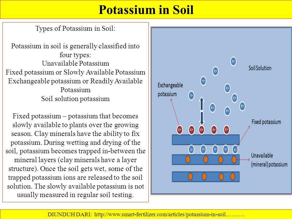 Readily Available Potassium : DIUNDUH DARI: ………. Potassium that is dissolved in soil water (water soluble) plus that held on the exchange sites on cla