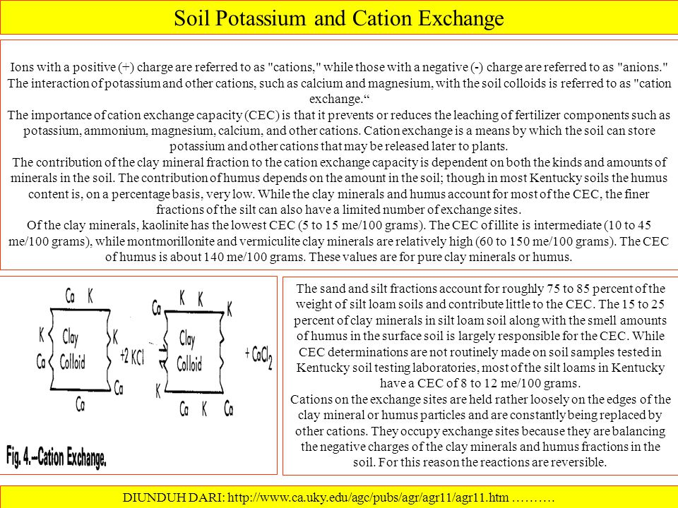 Soil Potassium and Clay Minerals DIUNDUH DARI: http://www.ca.uky.edu/agc/pubs/agr/agr11/agr11.htm………. Clay minerals (the dominant materials in the cla
