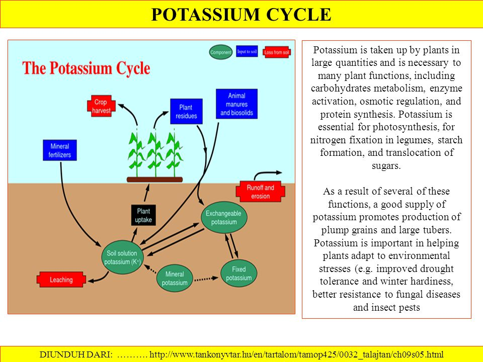 Soil Potassium and Cation Exchange DIUNDUH DARI: http://www.ca.uky.edu/agc/pubs/agr/agr11/agr11.htm ………. Ions with a positive (+) charge are referred
