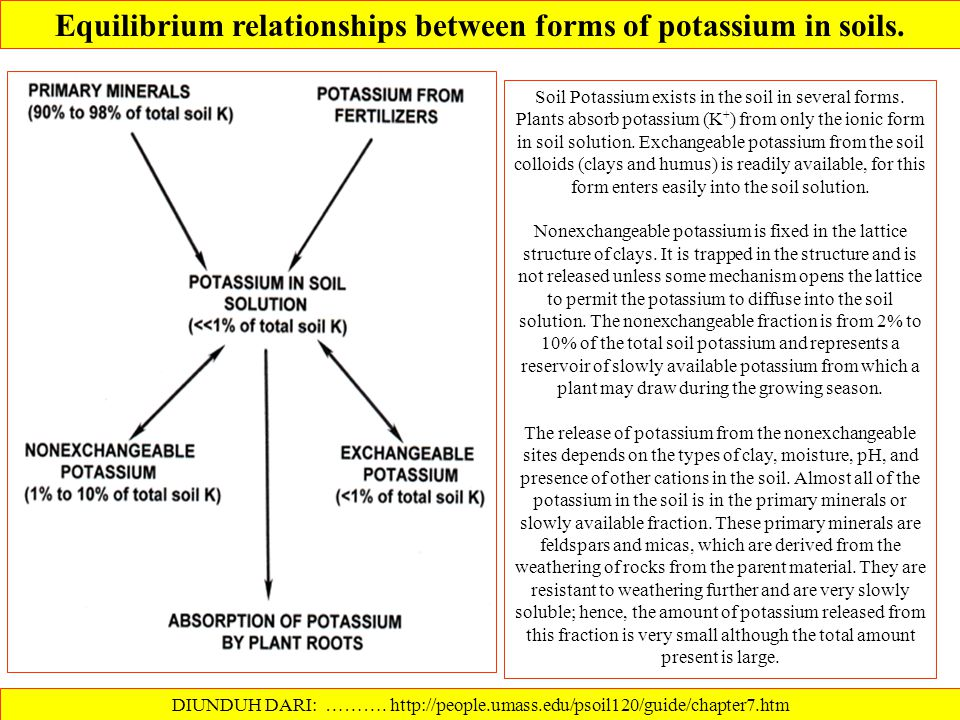 POTASSIUM CYCLE DIUNDUH DARI: ………. http://www.tankonyvtar.hu/en/tartalom/tamop425/0032_talajtan/ch09s05.html Potassium is taken up by plants in large