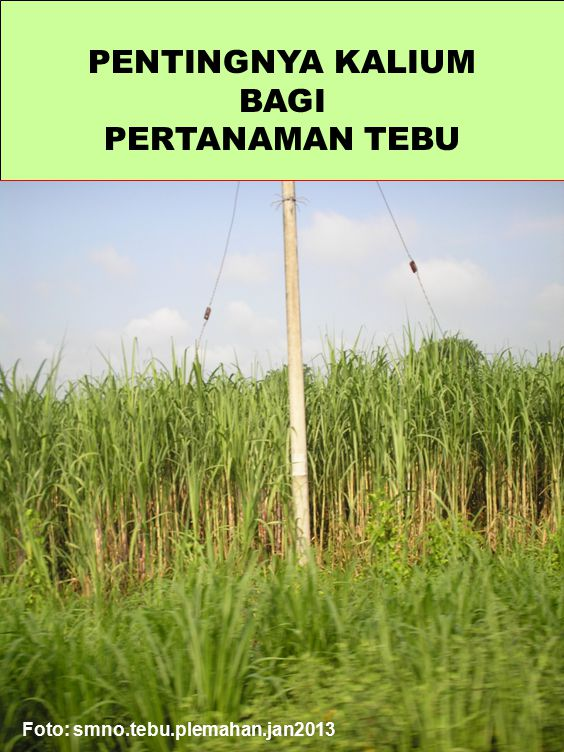 Growth, yield and crop quality performance of sugarcane cultivar Co 957 under different rates of application of nitrogen and potassium fertilizers A.