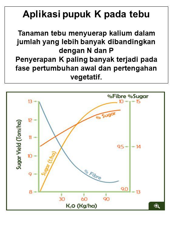 Aplikasi pupuk K pada tebu Tanaman tebu menyuerap kalium dalam jumlah yang lebih banyak dibandingkan dengan N dan P Penyerapan K paling banyak terjadi