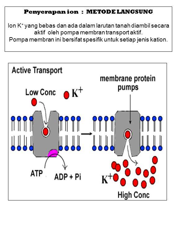 Penyerapan ion : METODE LANGSUNG Ion K + yang bebas dan ada dalam larutan tanah diambil secara aktif oleh pompa membran transport aktif. Pompa membran