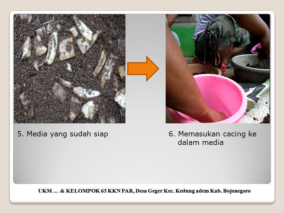 UKM … & KELOMPOK 63 KKN PAR, Desa Geger Kec. Kedung adem Kab. Bojonegoro 5. Media yang sudah siap6. Memasukan cacing ke dalam media