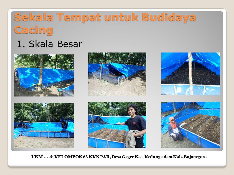 Sekala Tempat untuk Budidaya Cacing UKM … & KELOMPOK 63 KKN PAR, Desa Geger Kec. Kedung adem Kab. Bojonegoro 1. Skala Besar