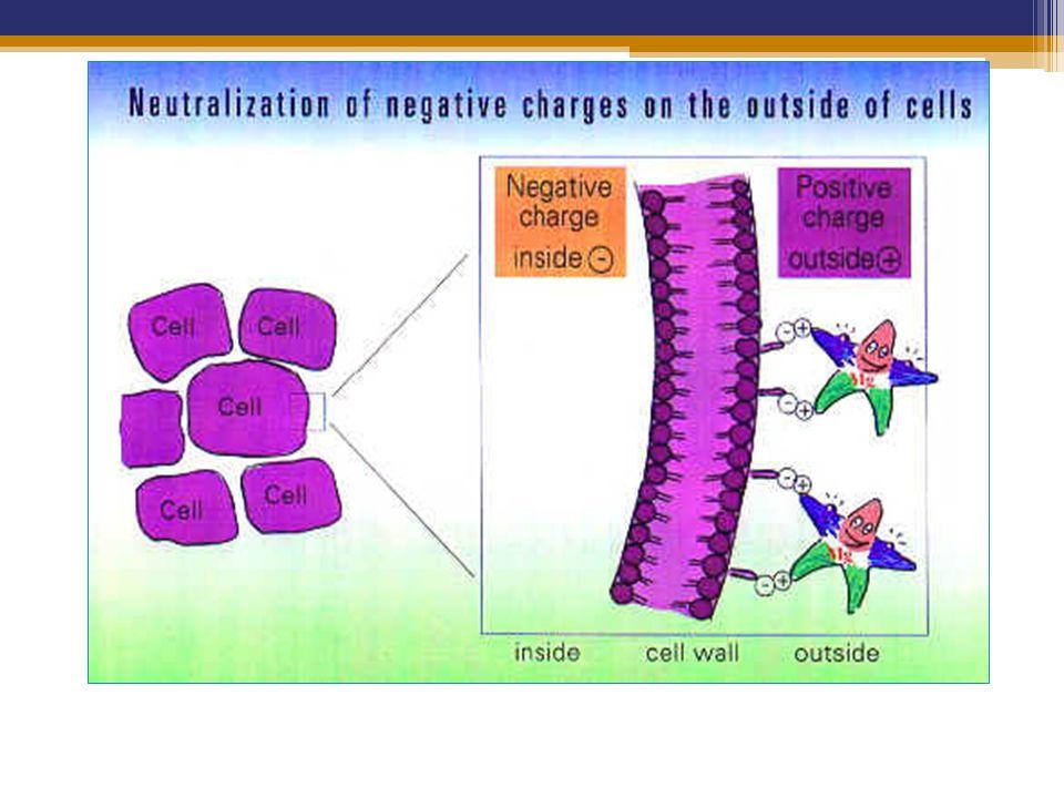 Berfungsi pula menghambat kalsium di sinapsis sel saraf = mencegah ekskresi neurotransmitter terutama adrenalin, nor adrenalin