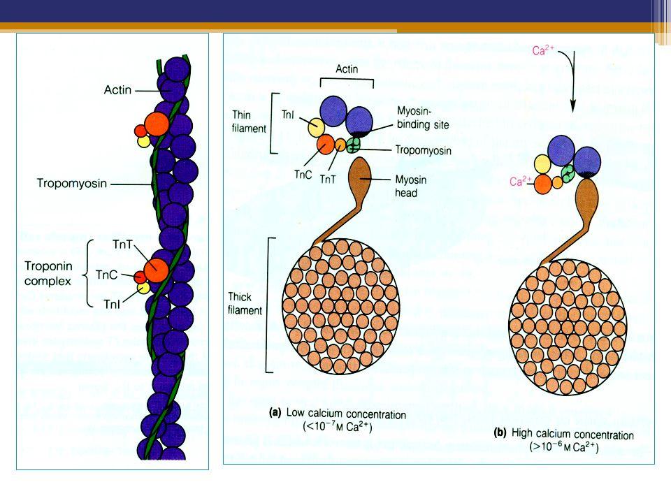 Potasium (K) Merupakan mineral esensial dan byk dikenal sbg elektrolit Fungsi tubuh  normal = tergantung konsentrasi K di dlm dan luar sel Berfungsi sebagai ▫Menjaga potensial membran sel ▫Kofaktor ensim