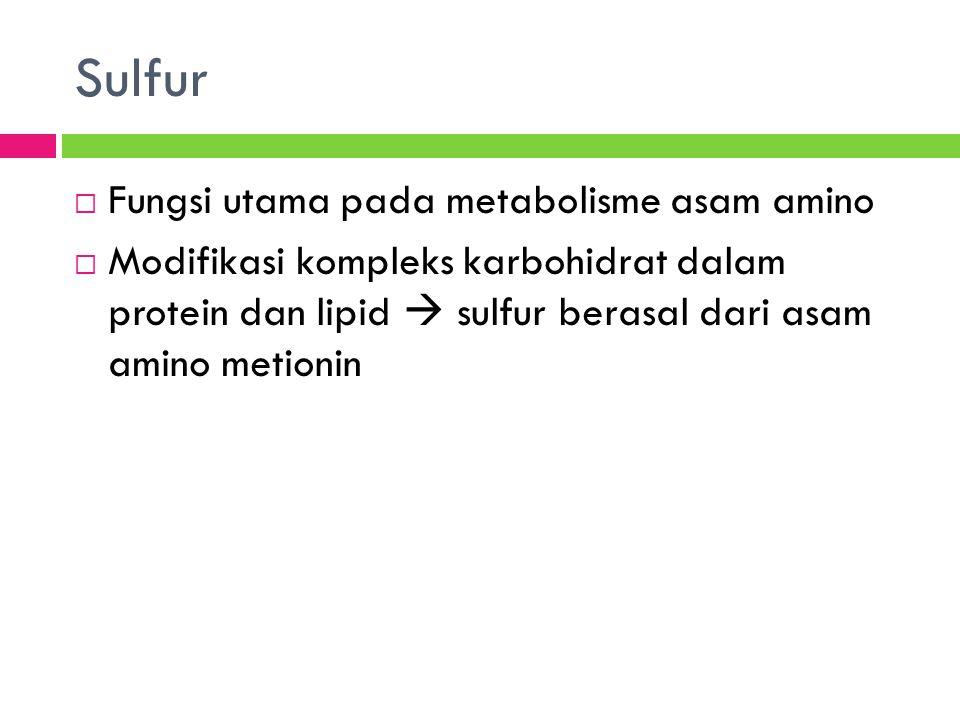 Sulfur  Fungsi utama pada metabolisme asam amino  Modifikasi kompleks karbohidrat dalam protein dan lipid  sulfur berasal dari asam amino metionin