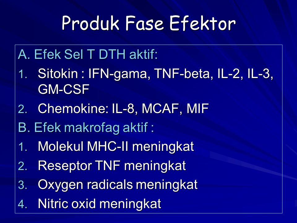 Produk Fase Efektor A. Efek Sel T DTH aktif: 1. Sitokin : IFN-gama, TNF-beta, IL-2, IL-3, GM-CSF 2. Chemokine: IL-8, MCAF, MIF B. Efek makrofag aktif