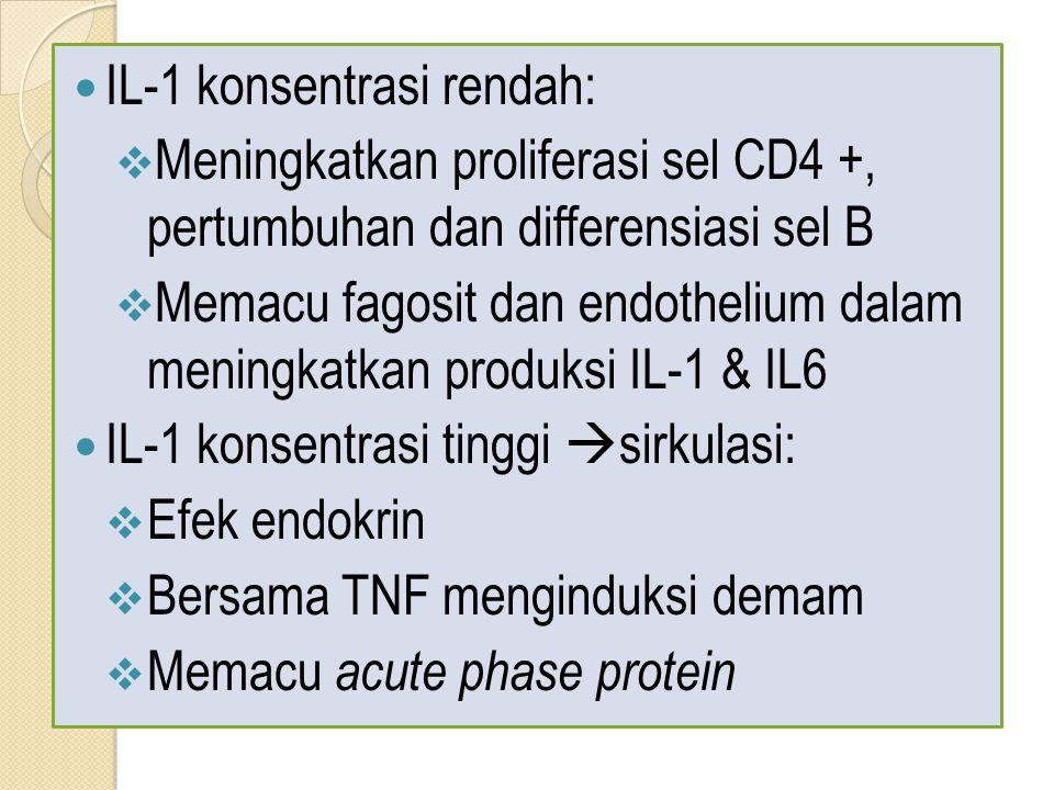 IL-1 konsentrasi rendah:  Meningkatkan proliferasi sel CD4 +, pertumbuhan dan differensiasi sel B  Memacu fagosit dan endothelium dalam meningkatkan produksi IL-1 & IL6 IL-1 konsentrasi tinggi  sirkulasi:  Efek endokrin  Bersama TNF menginduksi demam  Memacu acute phase protein