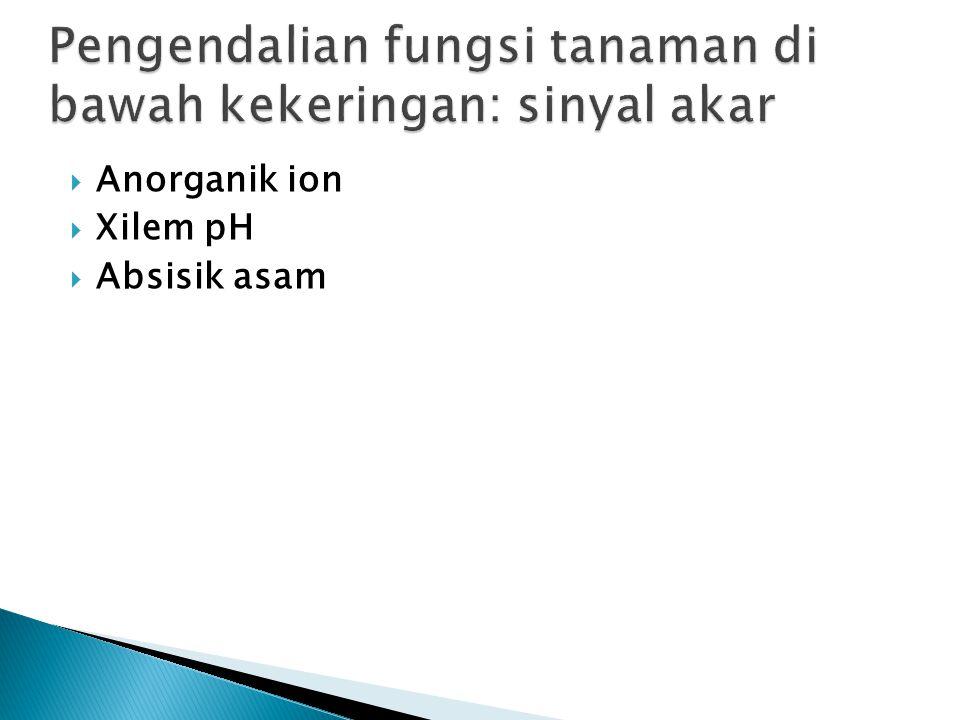  Anorganik ion  Xilem pH  Absisik asam
